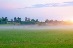 Rural landscape fog on a green field during sunset. Stock Images