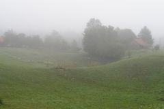 Rural landscape with fog in the morning Royalty Free Stock Image