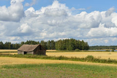 Rural landscape with gold field and barn Royalty Free Stock Image
