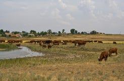 Rural landscape. Stock Images