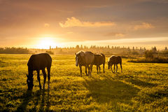 Rural landscape with grazing horses Royalty Free Stock Photos