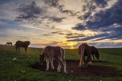 Rural landscape with grazing horses Stock Photography