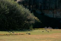 Rural landscape, grazing sheep, South Africa Stock Photos
