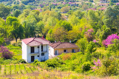 Rural landscape in Greece with farm and vineyards Royalty Free Stock Photo