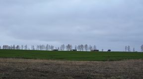 Rural landscape with green field of winter crops, trees on horizon, trucks on road and stratus clouds.  stock images