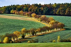Rural landscape with green fields, auto road and alley autumn trees, South Moravia, Czech Republic.  royalty free stock photography
