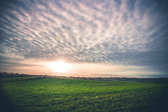 Rural landscape with green fields Royalty Free Stock Photo