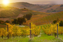 Rural landscape with a green vineyard among hills stock images
