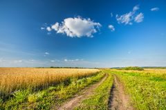 Rural landscape with ground road, wheat field and blue sky in a countryside royalty free stock photography