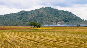 Rural landscape with harvested rice field Stock Photography