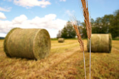 Rural landscape with hay bales Royalty Free Stock Image