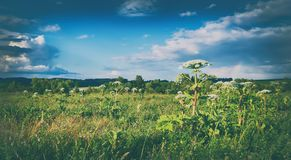 Rural landscape. Heraclium on the foreground. Panorama Royalty Free Stock Photography