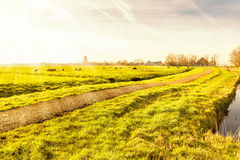 Rural landscape in Holland Royalty Free Stock Images