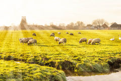 Rural landscape in Holland Royalty Free Stock Photos