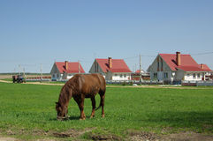 Rural landscape with a horse, Belarus Stock Photos