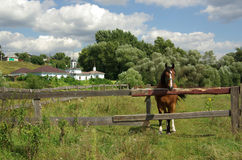 Rural landscape with a horse, Russia Royalty Free Stock Images