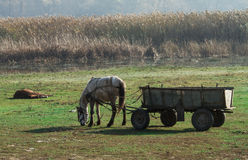 Rural landscape with horse and wood. Royalty Free Stock Photography