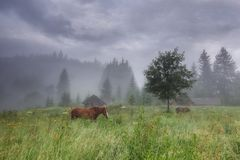 Rural landscape with horses stock images