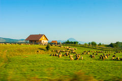 Rural landscape with houses in Transylvania, Romania Royalty Free Stock Image