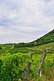 Rural landscape in Hungary near Balaton royalty free stock photo