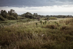 Rural landscape during hunting season with hunters in tall grass in rural field with dramatic sky during dusk royalty free stock image