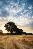 Rural landscape image of Summer sunset over field of hay bales Stock Photo