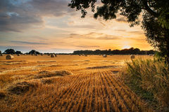 Rural landscape image of Summer sunset over field of hay bales Royalty Free Stock Images
