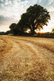 Rural landscape image of Summer sunset over field of hay bales Stock Image