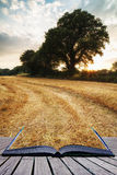 Rural landscape image of Summer sunset over field of hay bales c Stock Image
