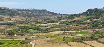Rural landscape on island Gozo. Rural landscape with  fields and vineyards on maltese island Gozo Stock Photography