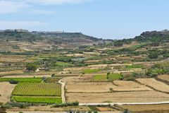 Rural landscape on island Gozo. Rural landscape with fields and vineyards on maltese island Gozo Stock Image