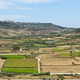 Rural landscape on island Gozo. Rural landscape with  fields and vineyards on maltese island Gozo Royalty Free Stock Image