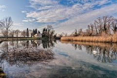 Nature landscape with lake, church and swan. Rural landscape. Lake with trees reeds, rural church and reflection. Swan swimming on water Royalty Free Stock Images