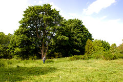 Rural landscape with lawn trimmer royalty free stock photography