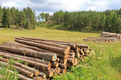 Rural Landscape with Log Piles at Summer Royalty Free Stock Images