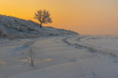 Rural landscape with lonely apricot tree on a hill at sunset time and  winter season Stock Photo