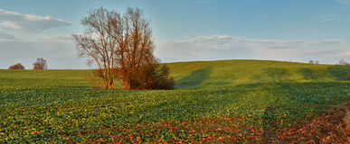 Rural landscape Stock Photography