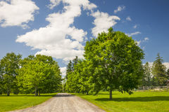 Rural landscape with maple trees Stock Photo