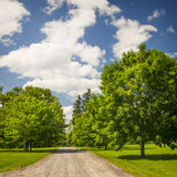 Rural landscape with maple trees Royalty Free Stock Image
