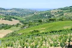 Rural landscape on Marche Stock Images