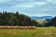 Rural landscape with a meadow and forest royalty free stock photos