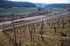 Rural landscape with vineyard Royalty Free Stock Image
