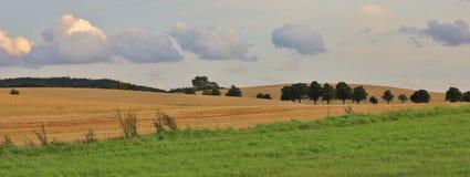 Green meadow and field in Zealand, Denmark. Rural summer scene. Rural landscape in Moen, Denmark. Fields and trees Stock Photo