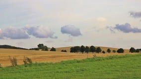 Rural landscape in Moen, Denmark. Fields and trees. Green meadow and field in Zealand, Denmark. Rural summer scene Stock Photo