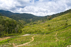 Rural landscape in mountains, New Guinea Royalty Free Stock Image