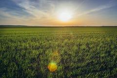 Fields in Austria. Rural landscape near Rabensburg village in Austria stock photography