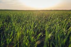Fields in Austria. Rural landscape near Rabensburg village in Austria royalty free stock image