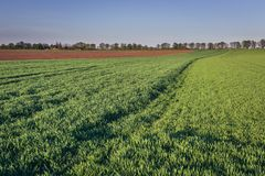 Fields in Austria. Rural landscape near Rabensburg village in Austria royalty free stock images