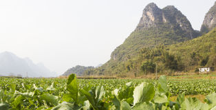Rural landscape near Yangshuo, China Stock Images