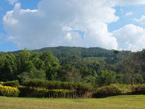 Rural landscape of northern Thailand on the background a mountai Royalty Free Stock Images